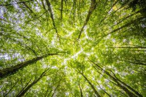 opłata środowiskowa